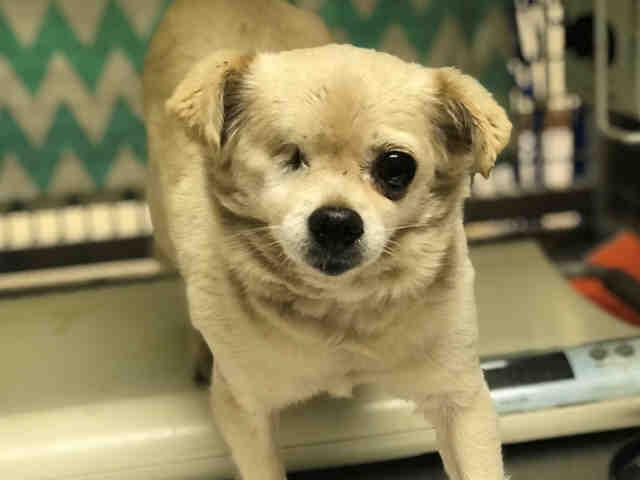 Found Dogs | Lost Dog San Diego