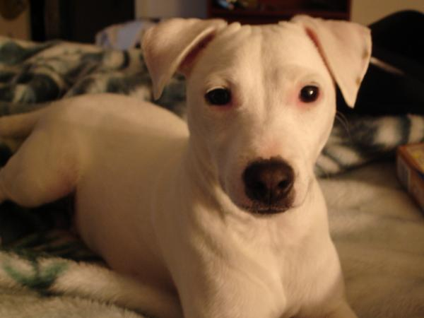Date Lost July 11 2017 Dog Type Jack Rus Terrier